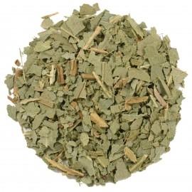 Eucalyptus Coupé - 10 grammes