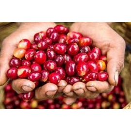Café Honduras - Lempira SGH Bio*