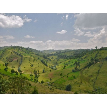 cafe-ethiopie-nyala-hauts-plateaux GRAIN